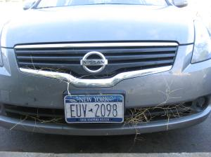 The following morning there were still a few tumbleweed remains on my rental car; this was taken in the parking lot of the radio station where I interviewed singer/songwriter Rochelle Smith.