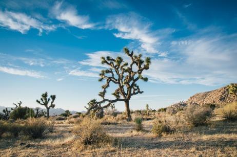 desert-landscape-1149773_1280